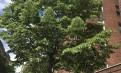 纽约市皇后区森林小丘两室一厅公寓$2050/月包水暖煤出租